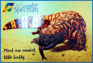 Spectrum紹介事例3